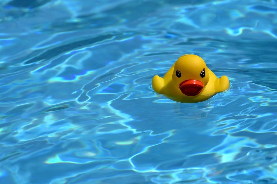 duck-2528924_960_720