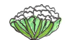 Choux Fleur