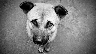 Hungry-Dog