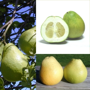 Owoce_Pomelo
