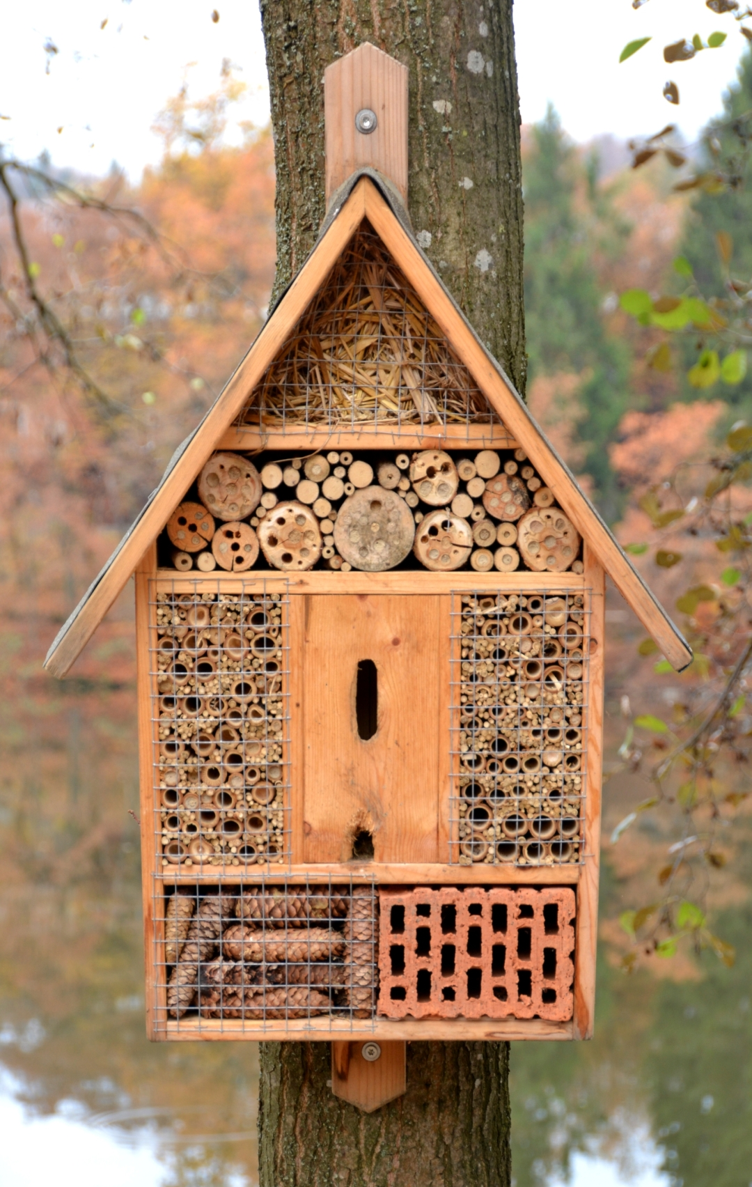 Insect_hotel,_Tittling